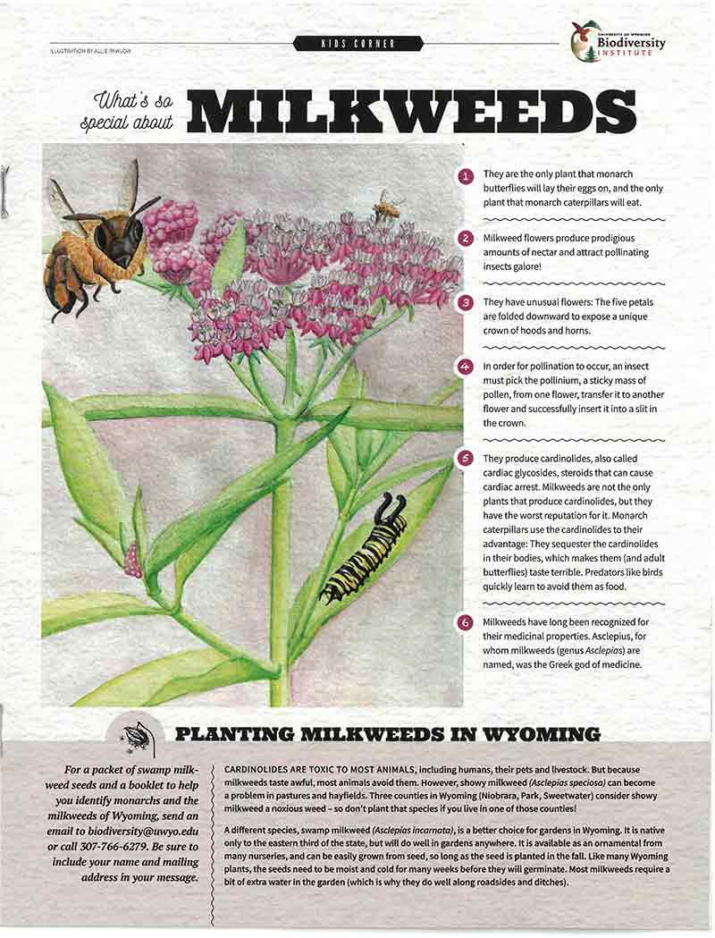 An illustrative image of a Wren article on milkweeds