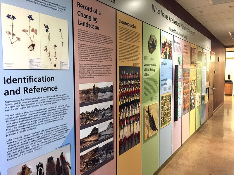 Picture of a display from the museum