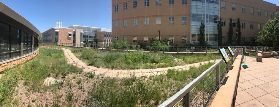 A picture of the gardens outside of the Biodiversity Institute