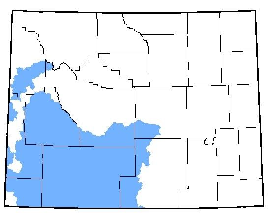 Map of Great Basin Spadefoot habitation