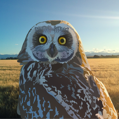 An artist's rendition of a short eared owl